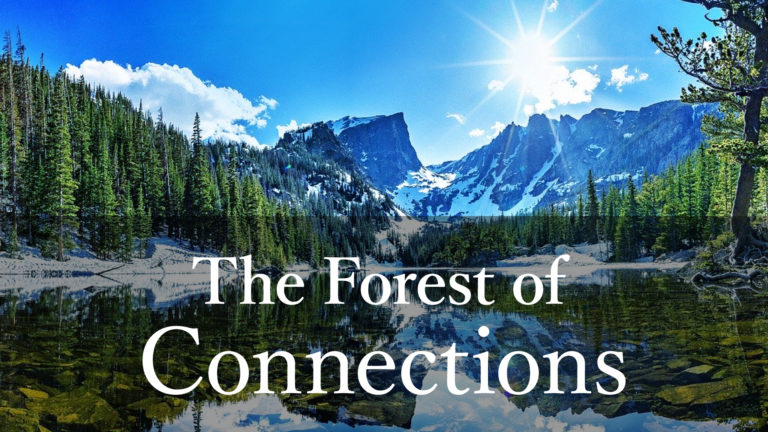The Fores of Connections